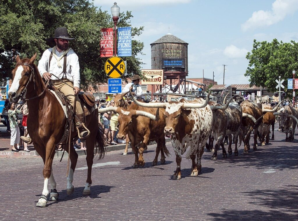 Fort Worth, Texas cattle drive